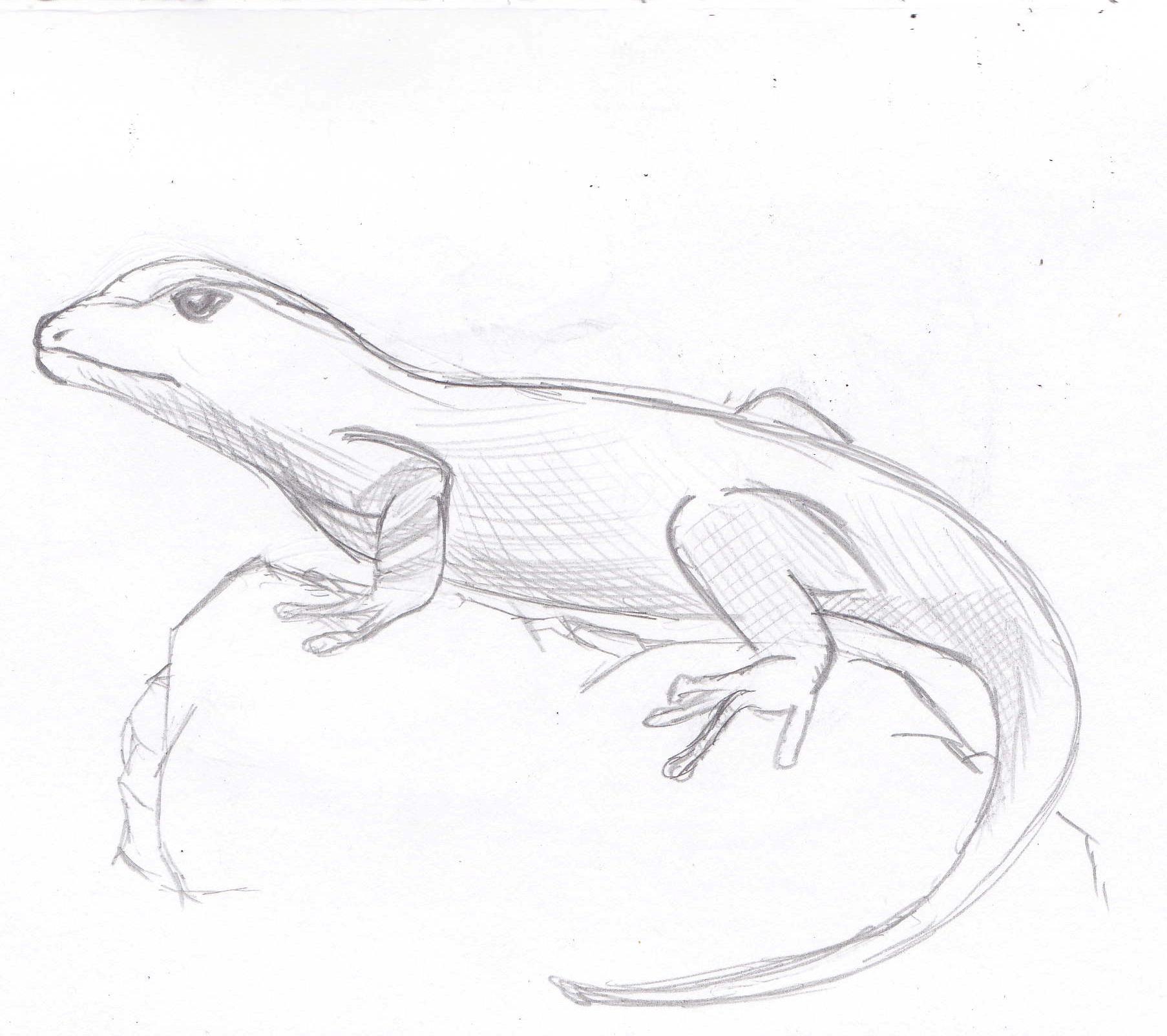 Рисунки ящериц для срисовки